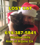 5-24-16 LOST Male Brown Black Cat Pockets Alpine Ca Call Alexis 619-387-5841