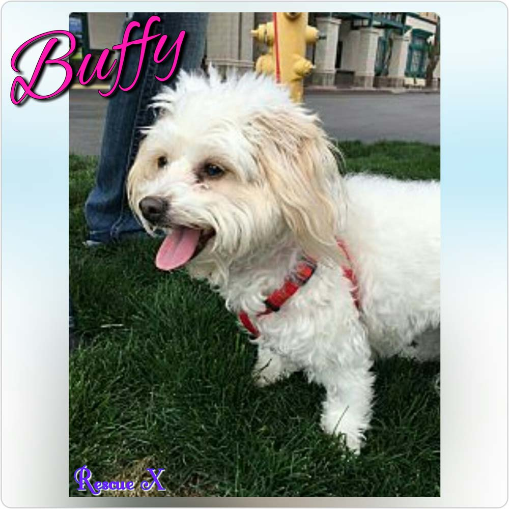 Buffy_Rescue X
