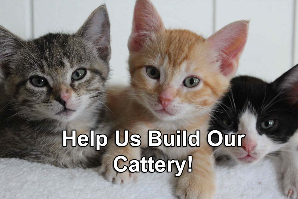 Cats_IMAGE_Shelter Pet Partners Cattery_Help