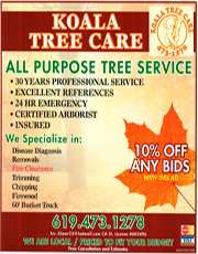 Koala Tree Care Alpine CA