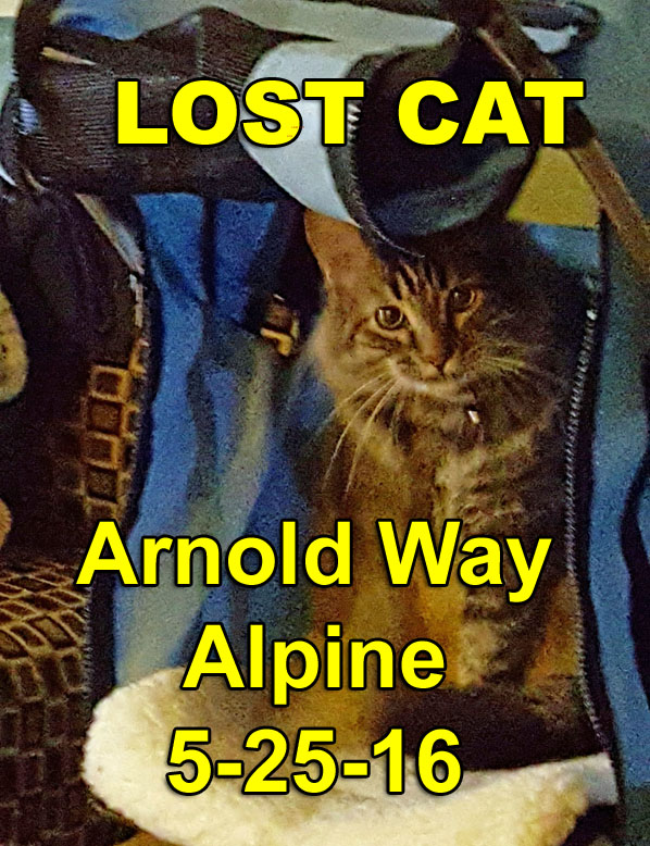 Lost Female Long Hair Tabby DIZZIE - Lisa keown Alpine Ca